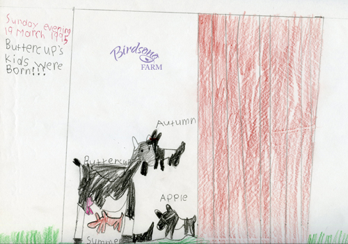 Naomi's drawing of Buttercup with her three kids in 1995