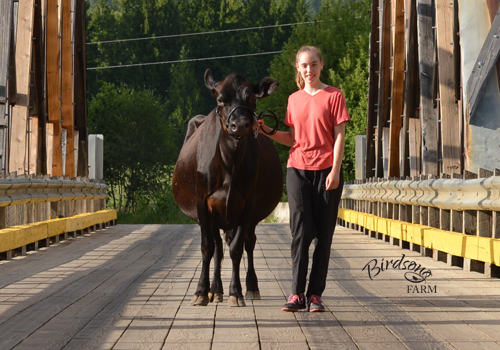 Naomi Fournier on the Baxter Bridge with her Jersey cow, Birdsong Autumn Aster.