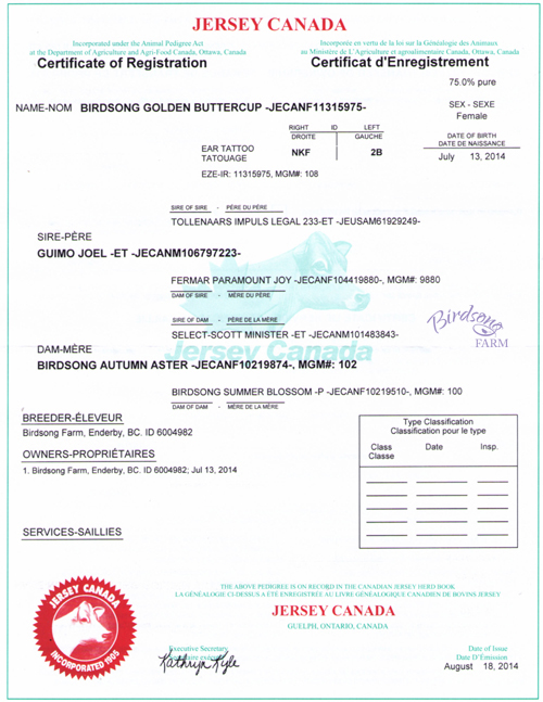 Jersey Canada Registration Paper